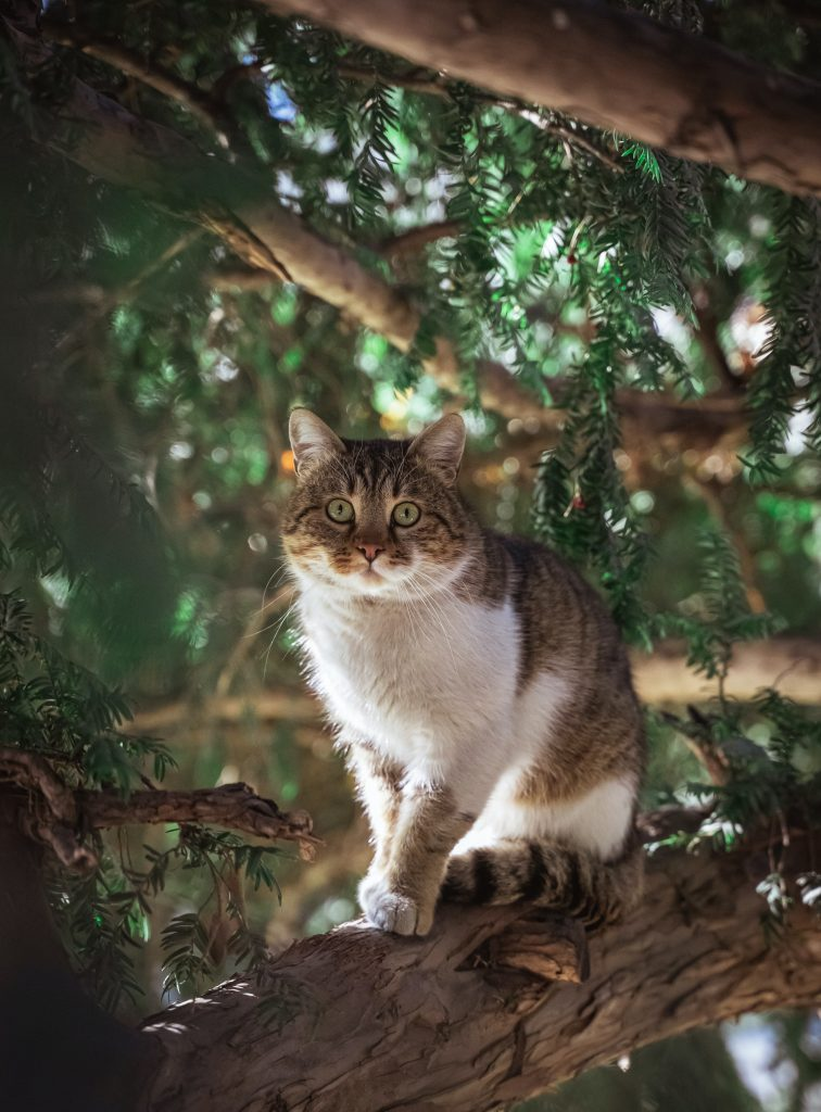 cat sitting in the woods
