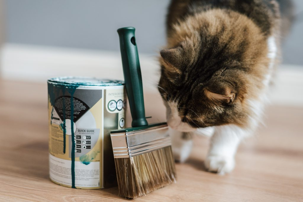 curious cat sniffing a paintbrush