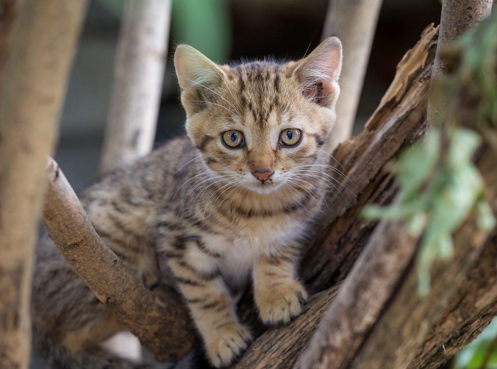 tabby kitten in tree