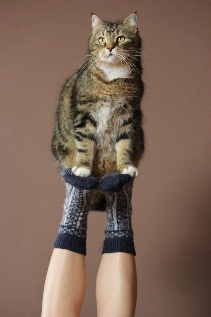 cat sitting on a person's feet