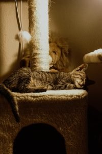 cat sleeping on a cat tree