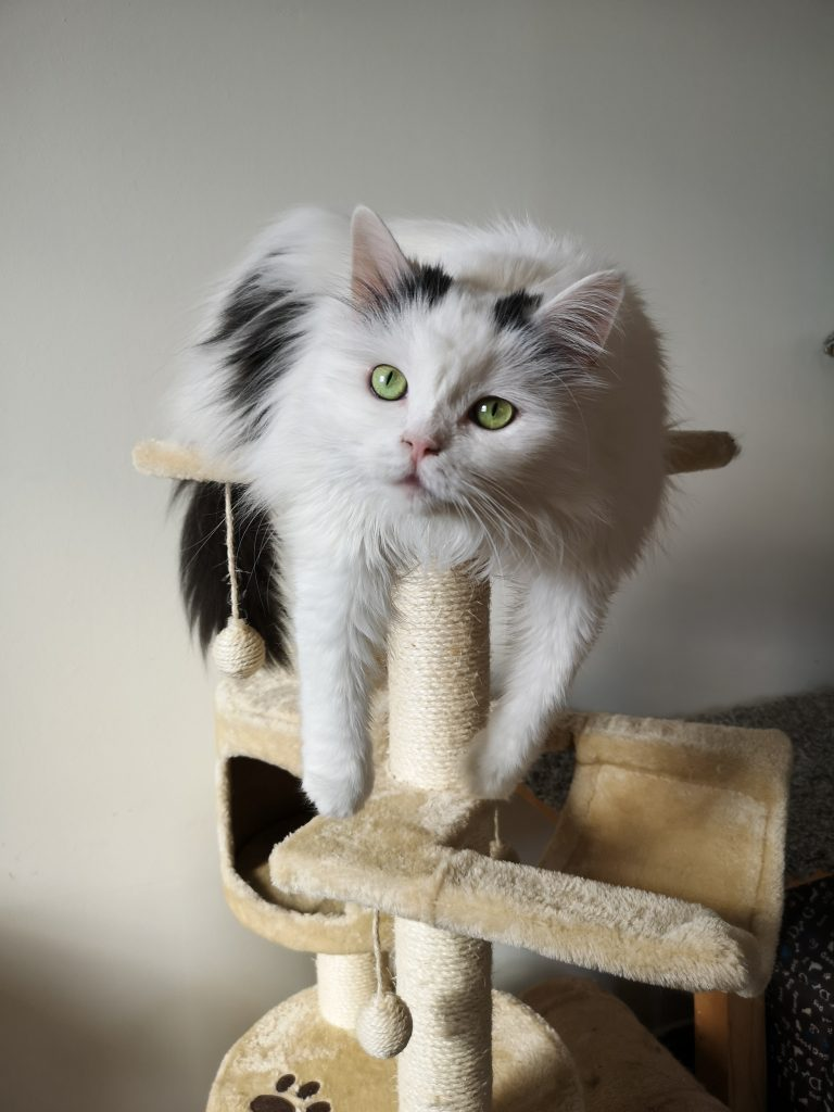 cat lounging on cat tree