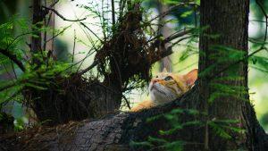 cat in tree looking up