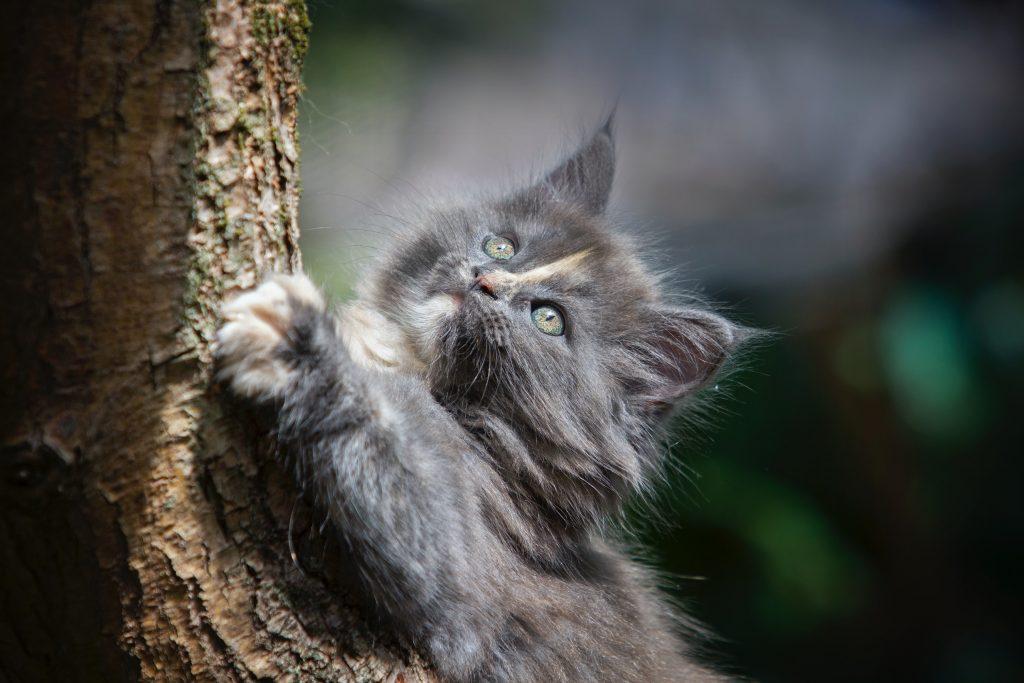 grey kitten at tree trunk