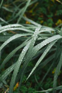 closeup of grass blades