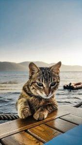 tabby cat near lake