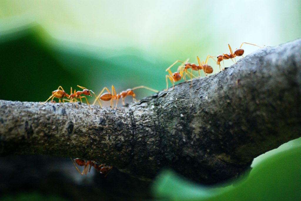 ants come marching