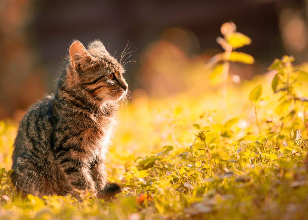 cat outside in tick area