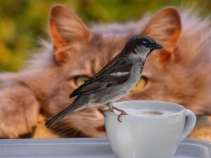 cat watching a sparrow