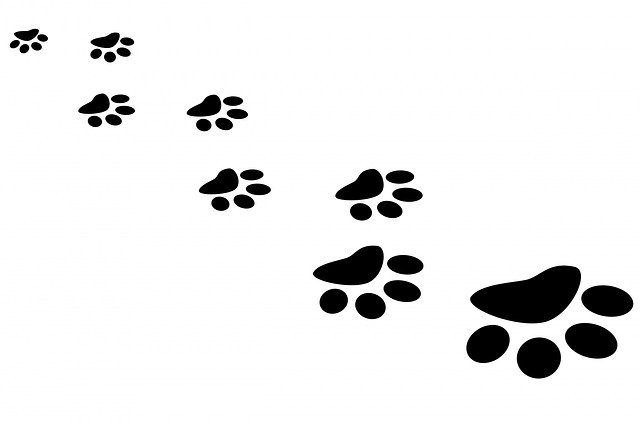 paw prints coming in from a distance