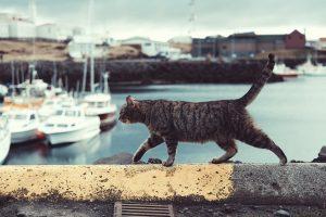 boat in harbor; cat walking on wall
