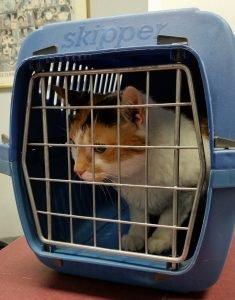cat in carrier with door closed