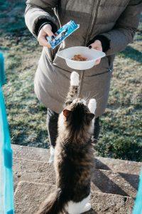 cat reaching for food bowl, treats