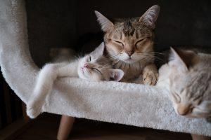 3 cats snoozing