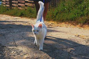 white cat surveying his territory