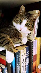 cat on a bookshelf