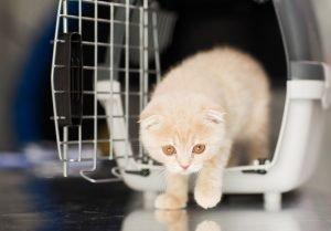 kitten emerging from front of hard cat carrier