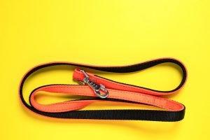 cat leash regular orange