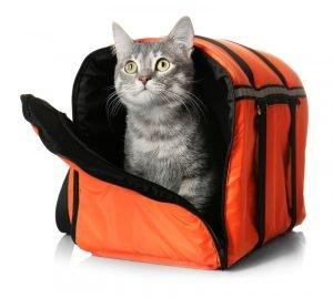 tabby cat in orange soft carrier