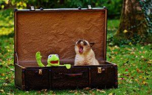 Kermit & Siamese cat in suitcase
