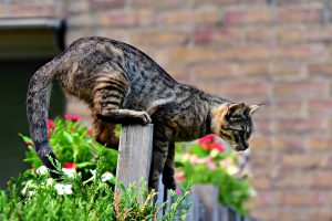 cat balancing on fence ready to jump