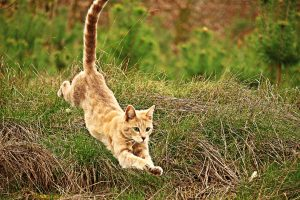 cat jumping down onto grass-front view