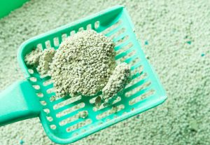 clump of green litter in scoop