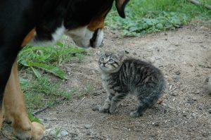scared kitten meeting dog