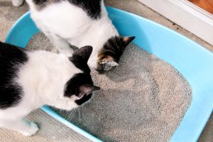 2 cats looking in litter box