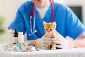 vet holding kitten