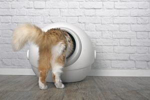 cat going into self cleaning litter box