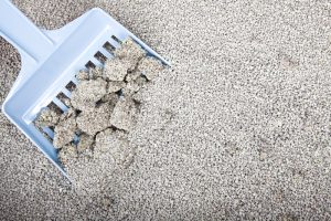 scooping clumping clay litter