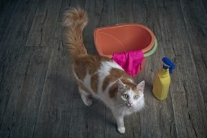 ginger, white cat standing by cleaning bucket