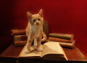 kitten standing on an open book-popular topics