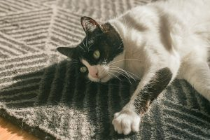 cat on rug-on side watching something