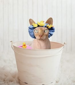 sphynx in bucket with duck shower cap